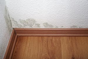 Household Mold Removal Highland Village